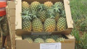 importation fruits exotiques ananas - La Ferme de la Métairie
